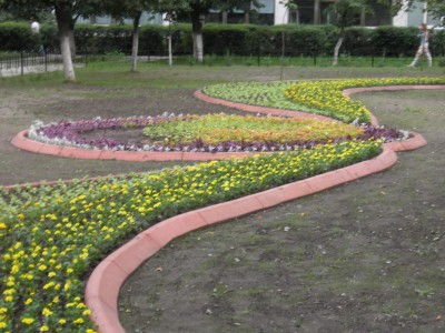 Растения для бордюров