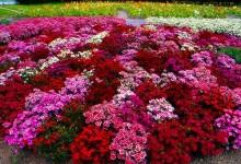 Цветники, фото