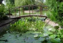 Дизайн пруда фото