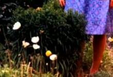 Райские сады