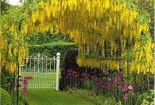 Садовые беседки фото