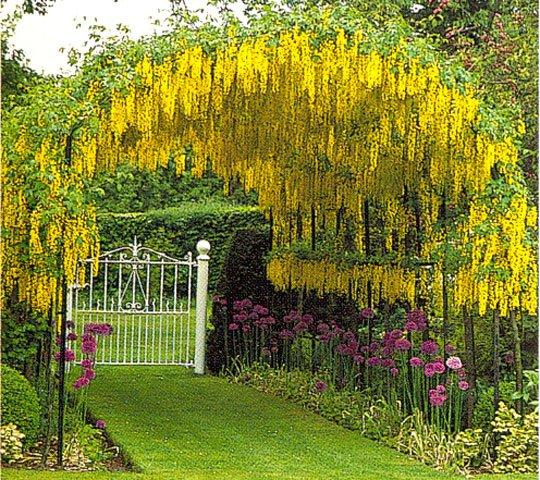 Фото садовых водоемов
