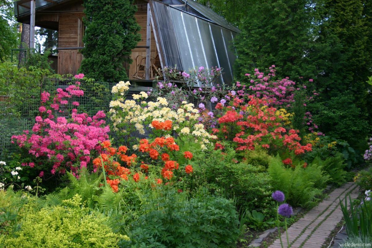 Цветы на даче отзывы фото