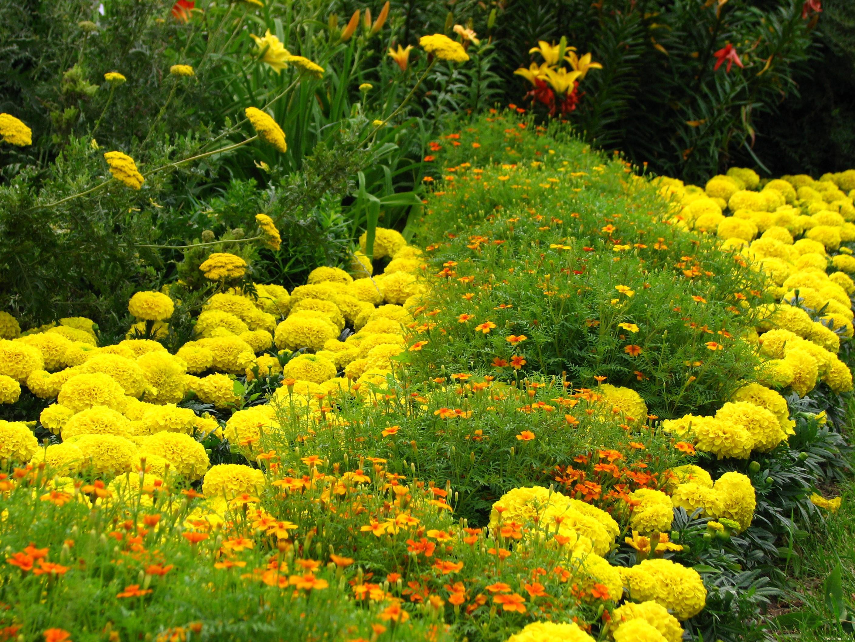 схема посадки цветов на клумбах