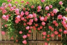 Маленький сад с розами