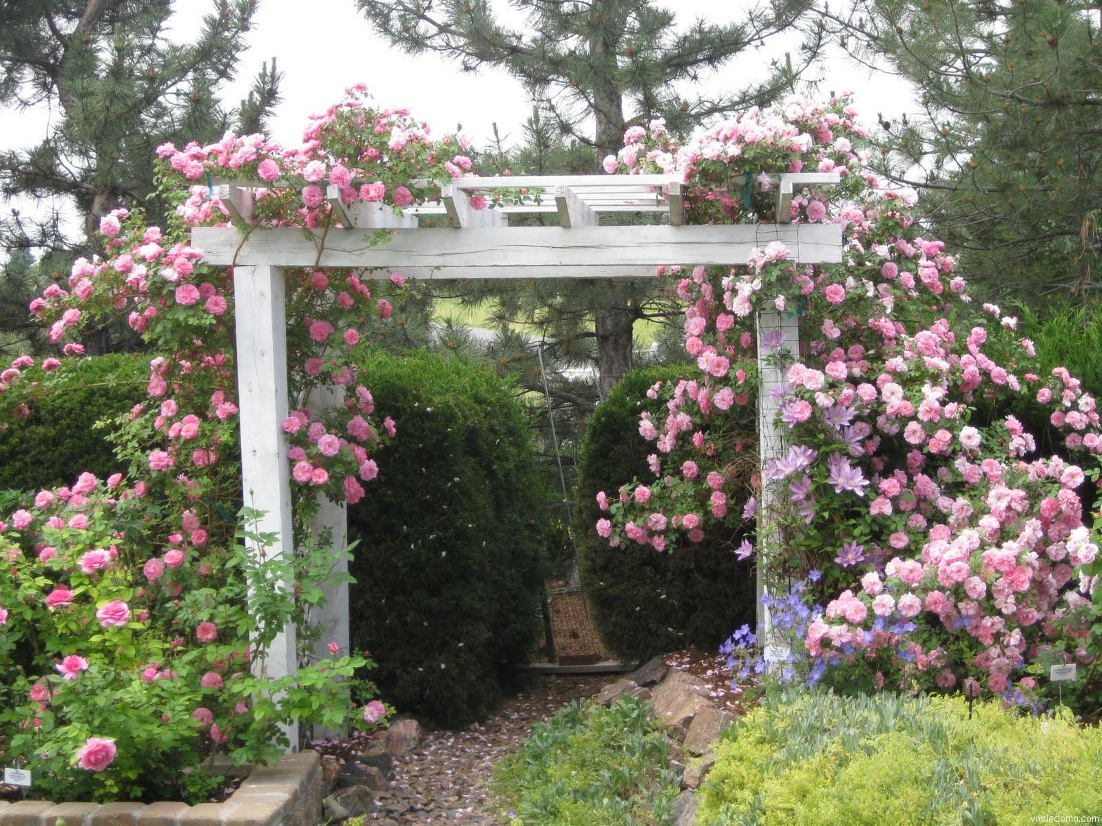Штамбовые розы в саду фото