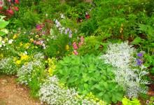 цветник из кустарников