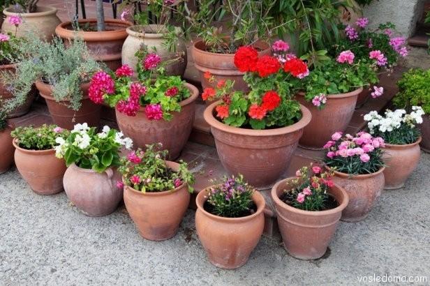 Выращивание уличных растений в горшках 97