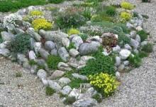 3-alpine-garden