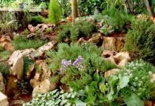 32-alpine-garden