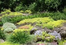 45-alpine-garden