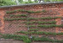 Двуплечный горизонтальный кордон возле стены