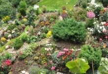9-alpine-garden