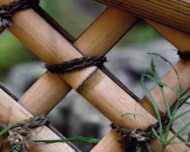 Бамбук на даче