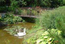 садовые мостики