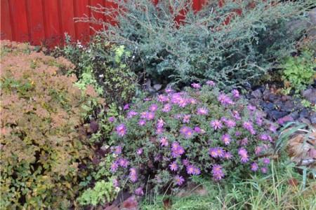Выбираем декоративные кустарники в саду. Посадка и уход.