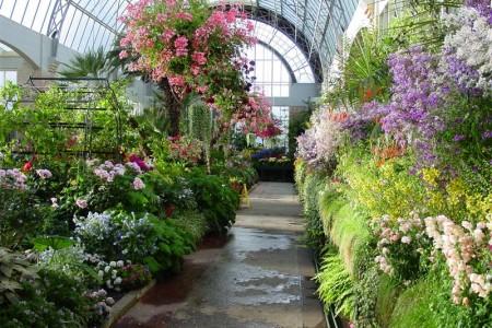 Зимний сад
