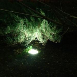 Подсветка кустарников