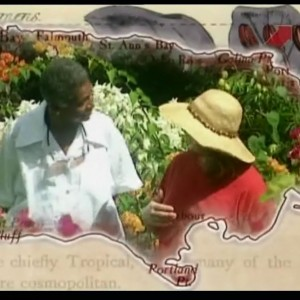 Карибские сады