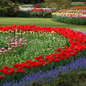 10-flowerbed