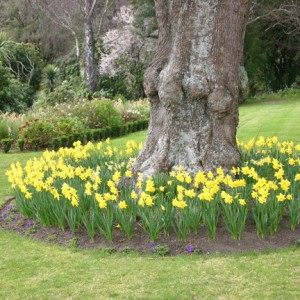 11-flowerbed
