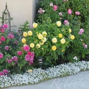 12-flowerbed