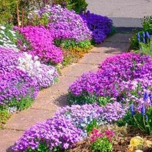 34-garden-path