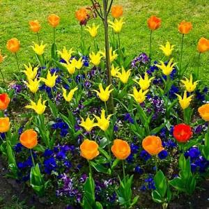 35-flowerbed