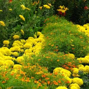 39-flowerbed