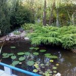 Какой водоем выбрать – бассейн или пруд