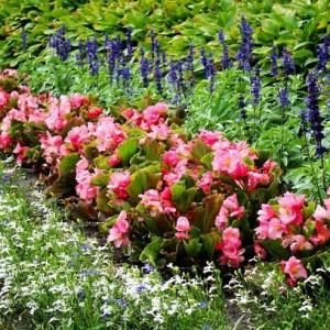 9-flowerbed