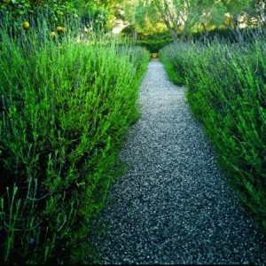 garden-path-ideas55