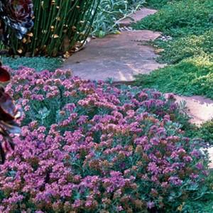 garden-tours-by-martha1-10