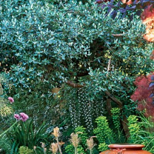 garden-tours-by-martha1-2