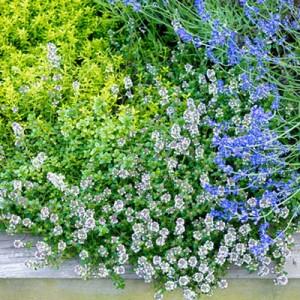garden-tours-by-martha4-9