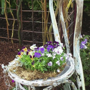 planting-flowers-in-chairs2-12