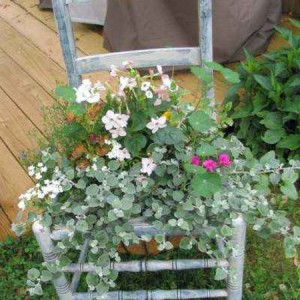 planting-flowers-in-chairs2-14