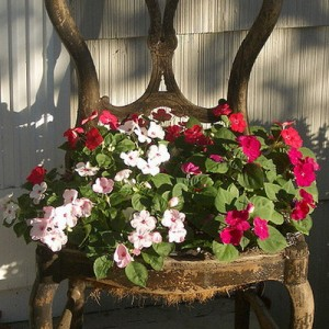 planting-flowers-in-chairs2-9
