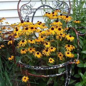 planting-flowers-in-chairs3-2