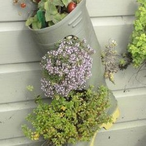 shoes-container-garden2-1
