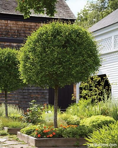 Деревца с шарообразной кроной