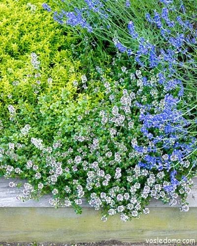 Светлые цветы прекрасное украшение сада
