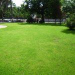 Самостоятельный посев зеленого газона на загородном участке
