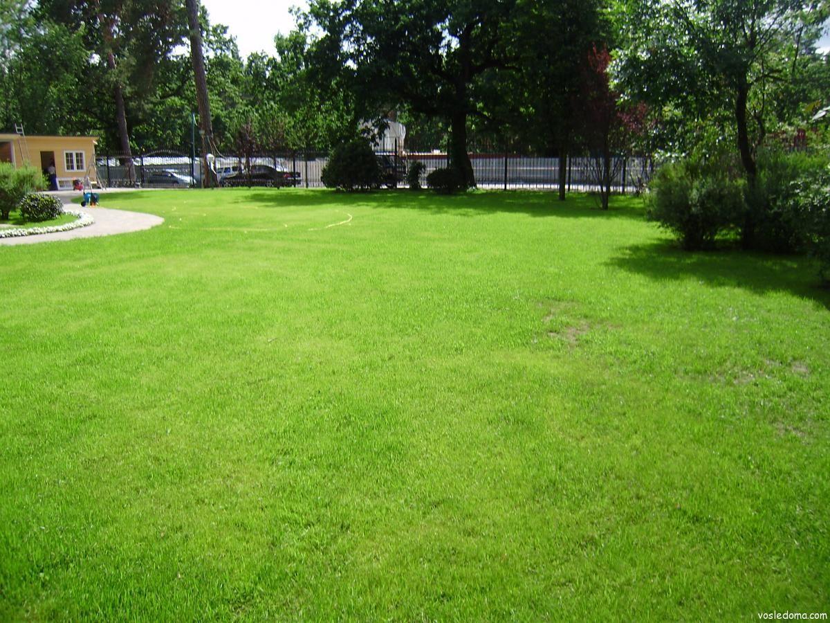 Трава на участке своими руками фото 332