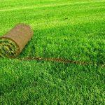 Рулонный газон – изумрудное поле за несколько дней