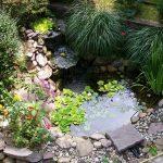 Растения для водоема – украшение, а не случайные заросли
