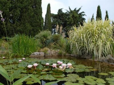 Растения для водоема