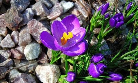 Цветы и камни