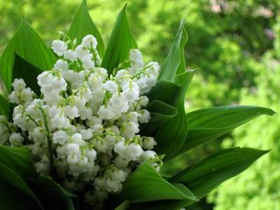 Нежность и очарование поникающих цветов
