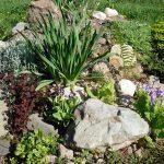 Как подбирать растения для рокариев